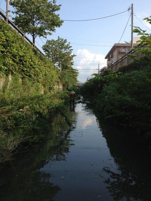 谷沢川01.jpg