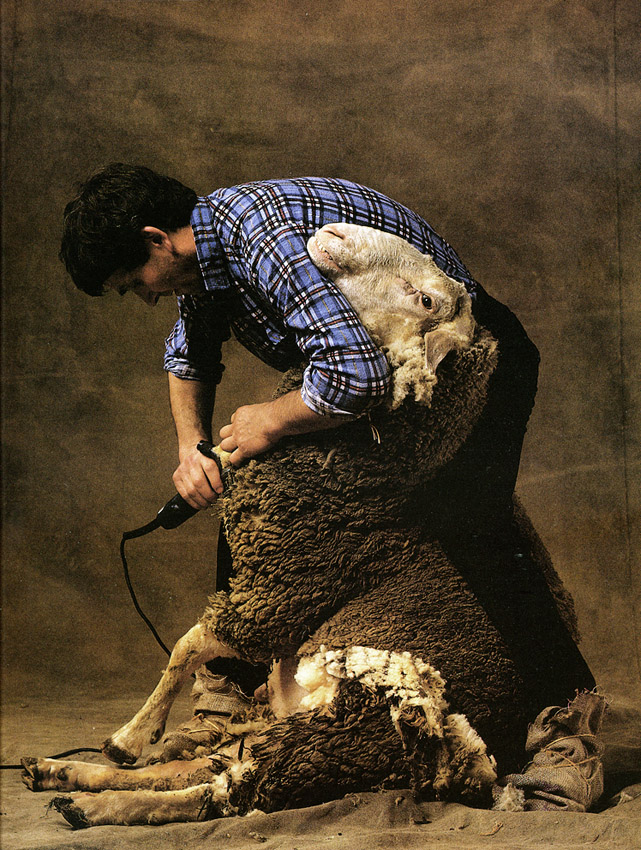 valli-sheep.jpg